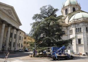 Como trasnennamento del cedro del Llibano di piazza Verdi per essere sradicato e trasferito in altra sede